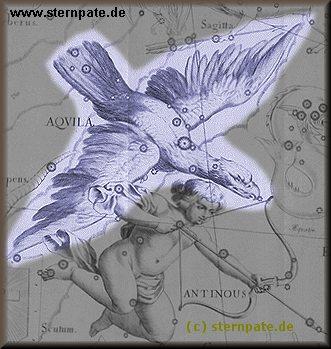 Adler am Sommerhimmel
