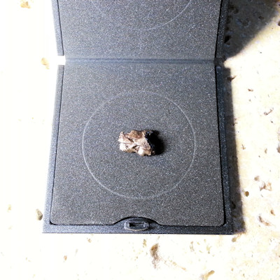 Pallas II (Campo del Cielo Meteorit)